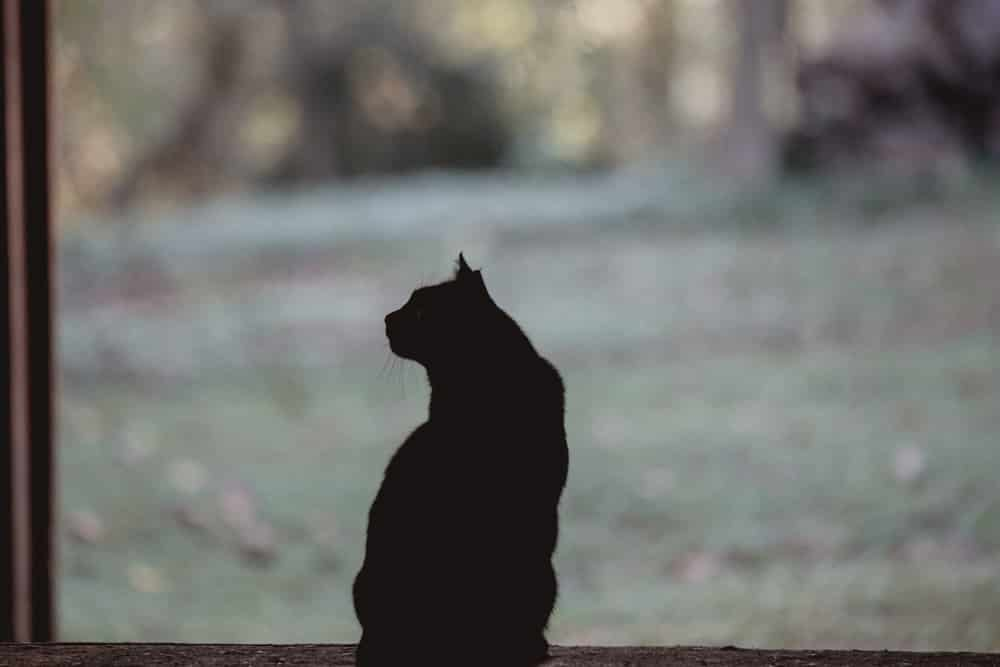 cats silhouette kathy duffy farm milton georgia